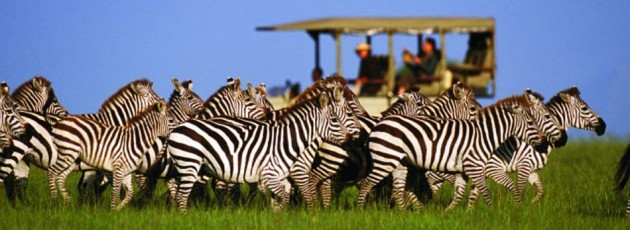 séminaire incentive Afrique du Sud - Ysséo Event Agence Incentive