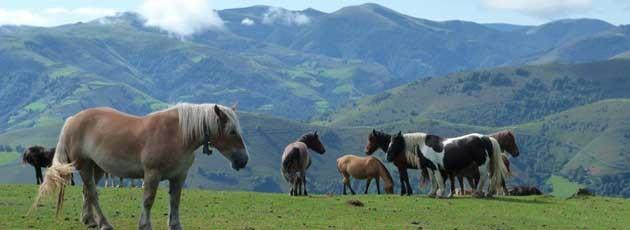 Séminaire incentive au Pays Basque-Ysséo Event (6,