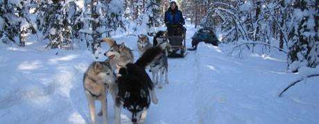 Team building chiens de traineau-Ysséo Event