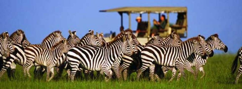 Voyage incentive en Afrique du Sud - Ysséo Event agence incentive (1,