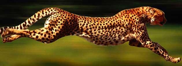 Voyage incentive en Afrique du Sud - Ysséo Event agence incentive (2,