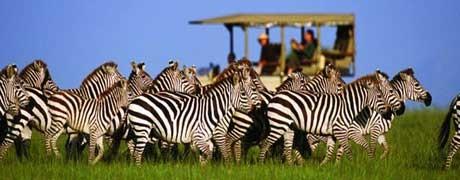 Voyage incentive en Afrique du Sud - Ysséo Event agence incentive