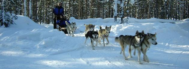 Voyage incentive en Laponie - Ysséo Event agence incentive (4,