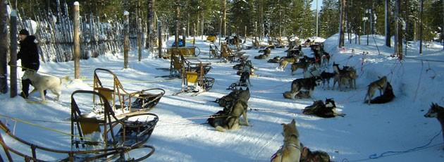 Voyage incentive en Laponie - Ysséo Event agence incentive (5,