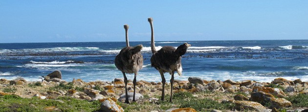 Voyage incentive clients Afrique du Sud - Ysséo Event agence incentive (3,